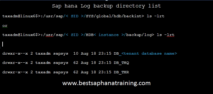 sap hana log backup directory